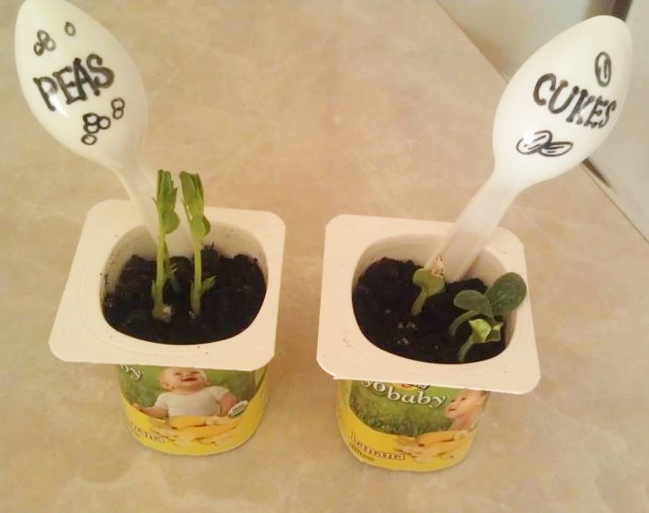 Easy Yogurt Cup Planters seed starters are a fun way to upcycle and start your garden for growing plants | gardening | planters | seed starters | garden starter | upcycling for garden | garden markers | upcycled yogurt cups | green living