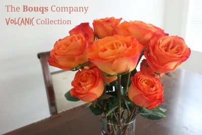 The Bouqs Company Volcanic Collection