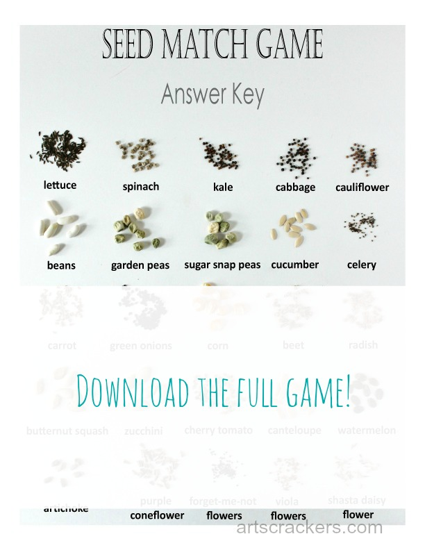 Seed-Match-Game-Answer-Key