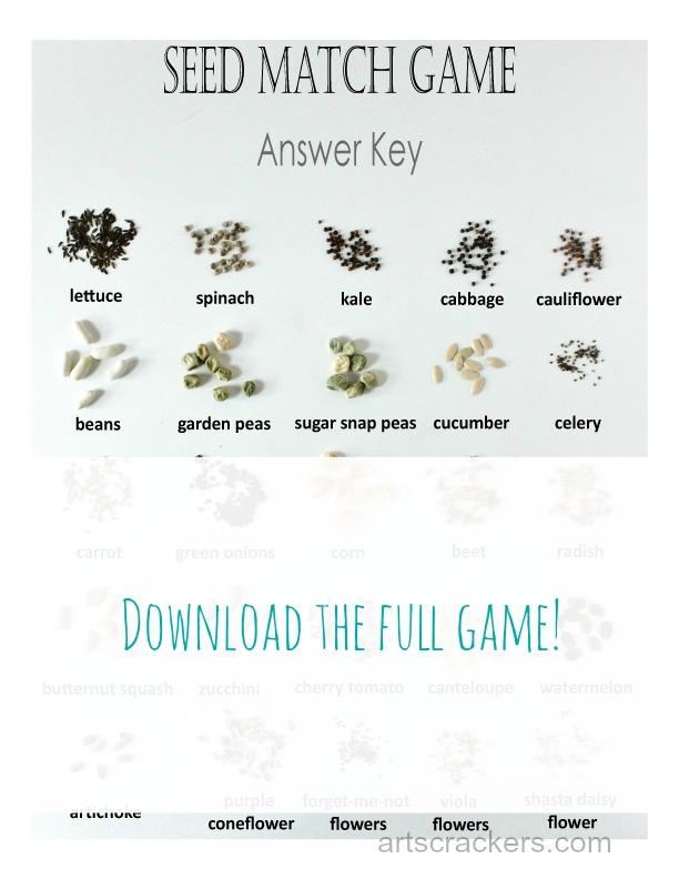 Seed-Match-Game-Answer-Key