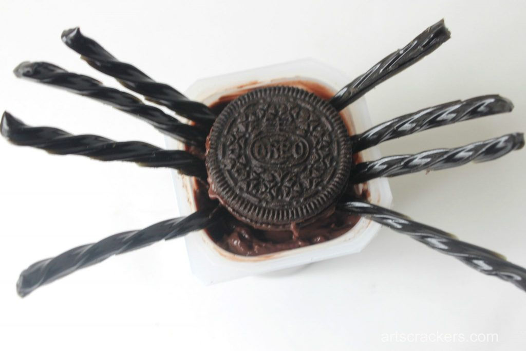 Pudding Cup Spider 3