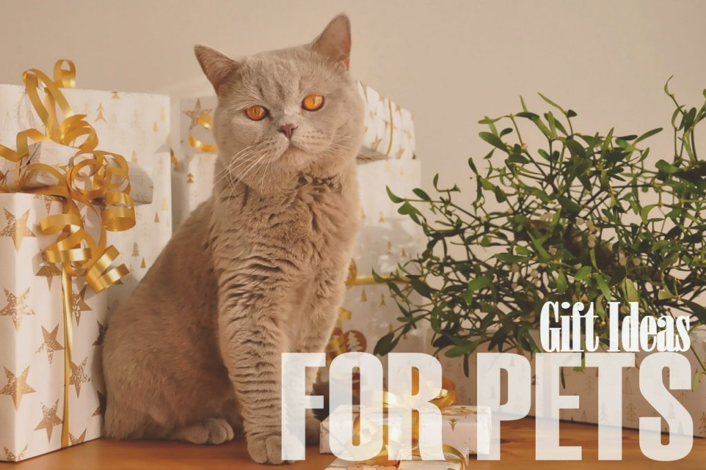 gift-ideas-for-pets