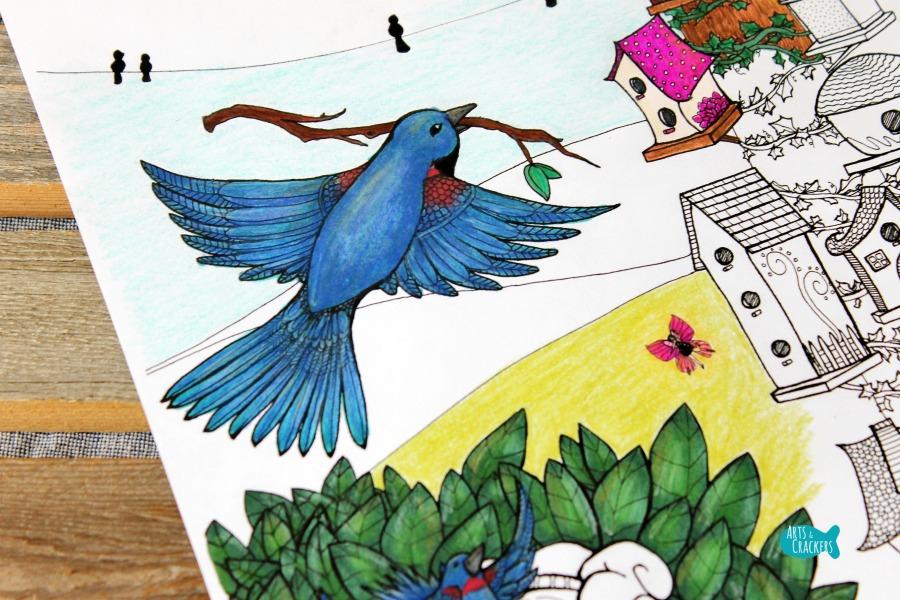 Birds Coloring Page Home Tweet Home Bluebird