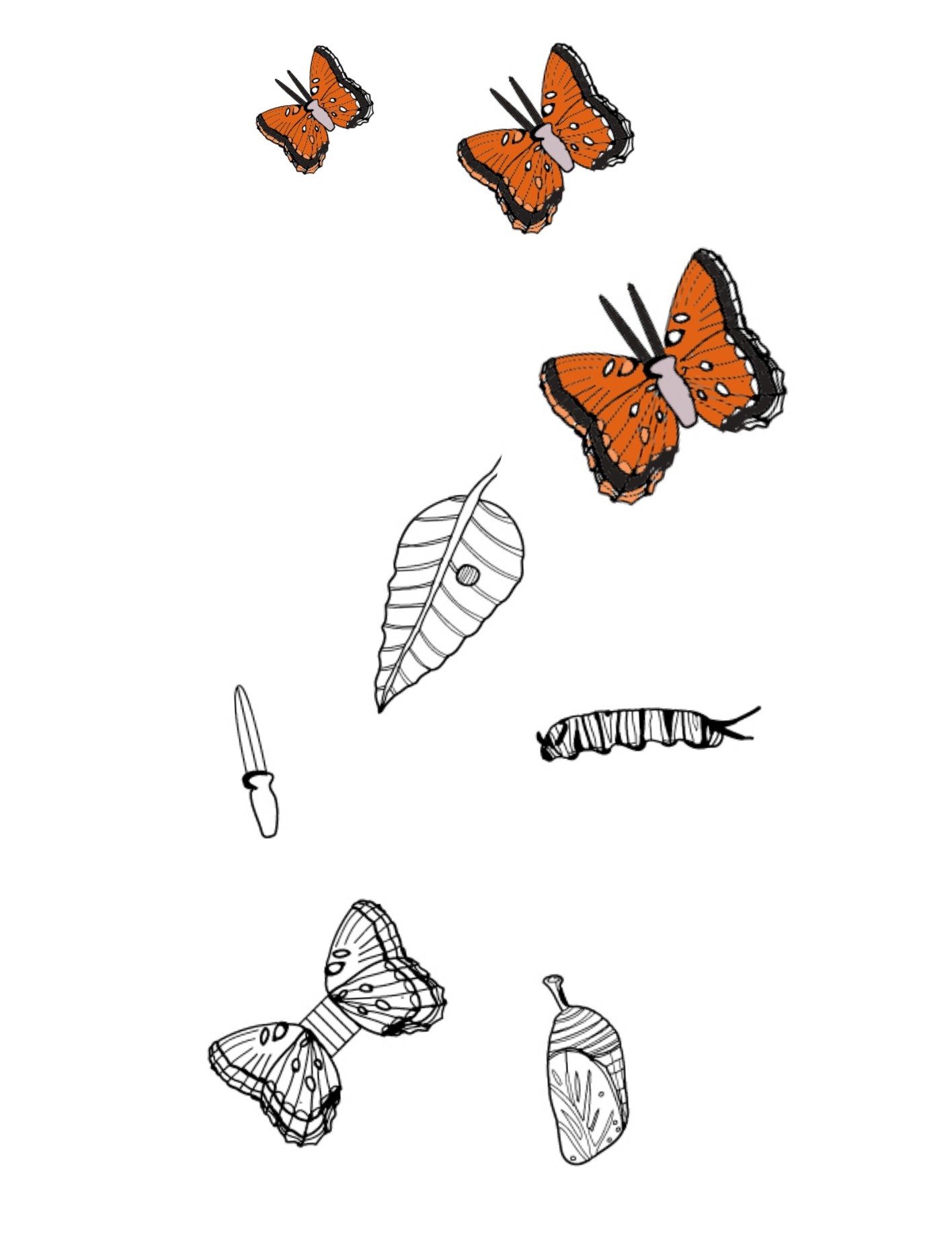 Printable 'Butterfly Life Cycle' Coloring Pages You Can Cut Out