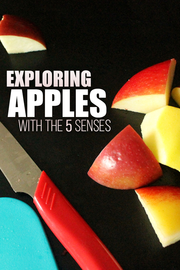 Use the five senses for this interactive fall apple activity for kids | preschool | kindergarten | grade school | homeschool | 5 senses | learning activity | fall activities | autumn education | apple picking | #earlyeducation #kidblogger