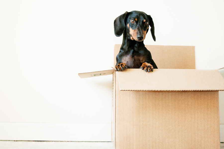 Getting ready to move? These packing tips for moving and our digital/printable moving checklist is such a helpful moving resource   military PCS move   moving tips   moving house   moving checklist   moving tips   PCS resources   moving boxes #moving #home #militaryresources #pcs